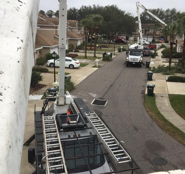 Tampa Bay Arborist Is Offering Tree Risk Assessment Services