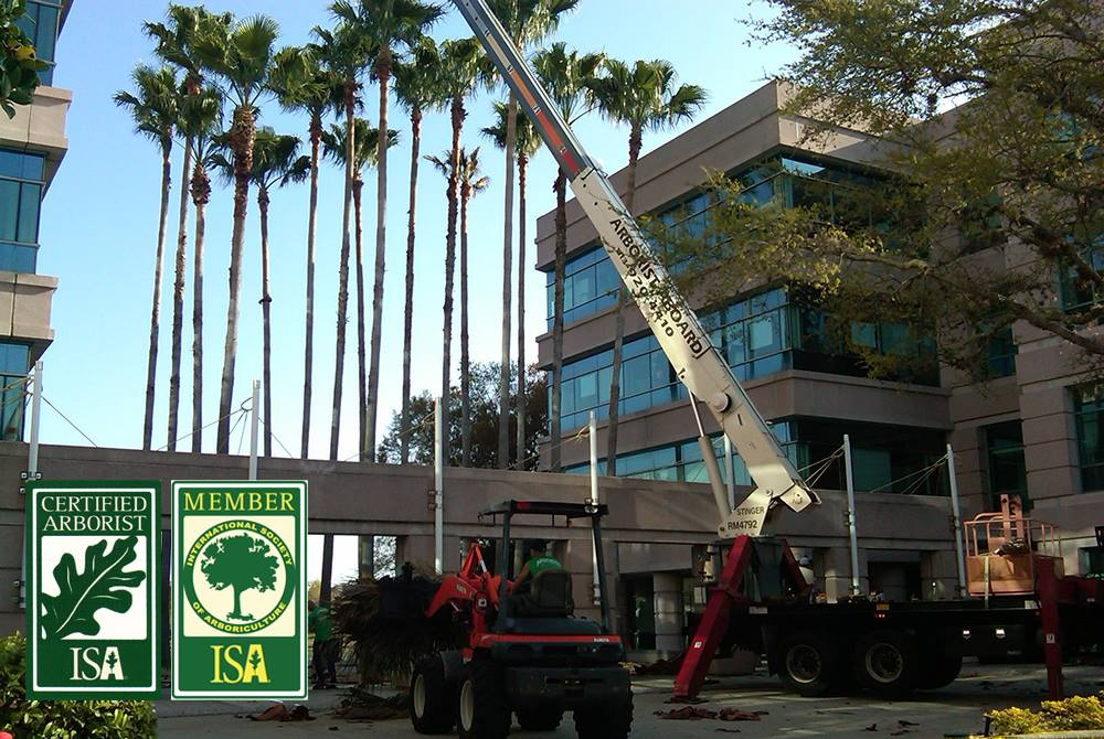 What Is a Certified Arborist? ISA Certification Guide
