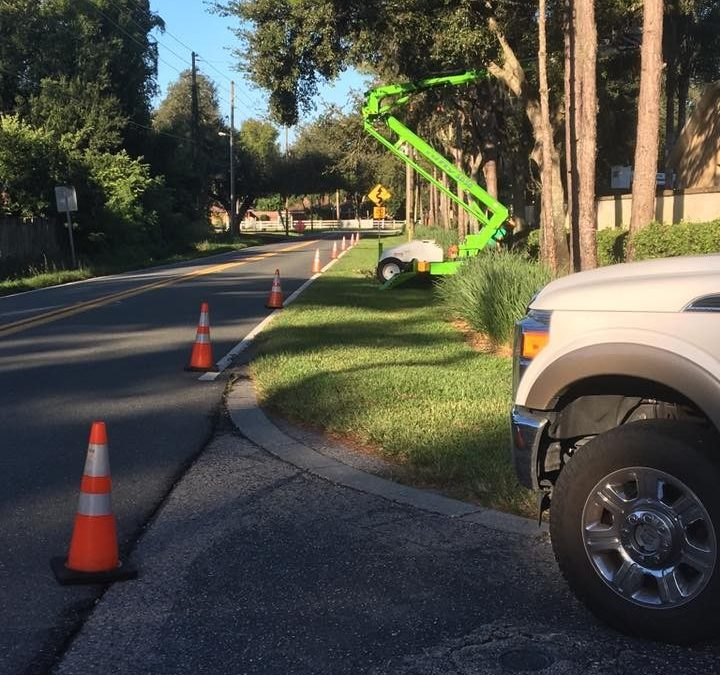 Carrollwood's Top Tree Care Company Offers Quality Service
