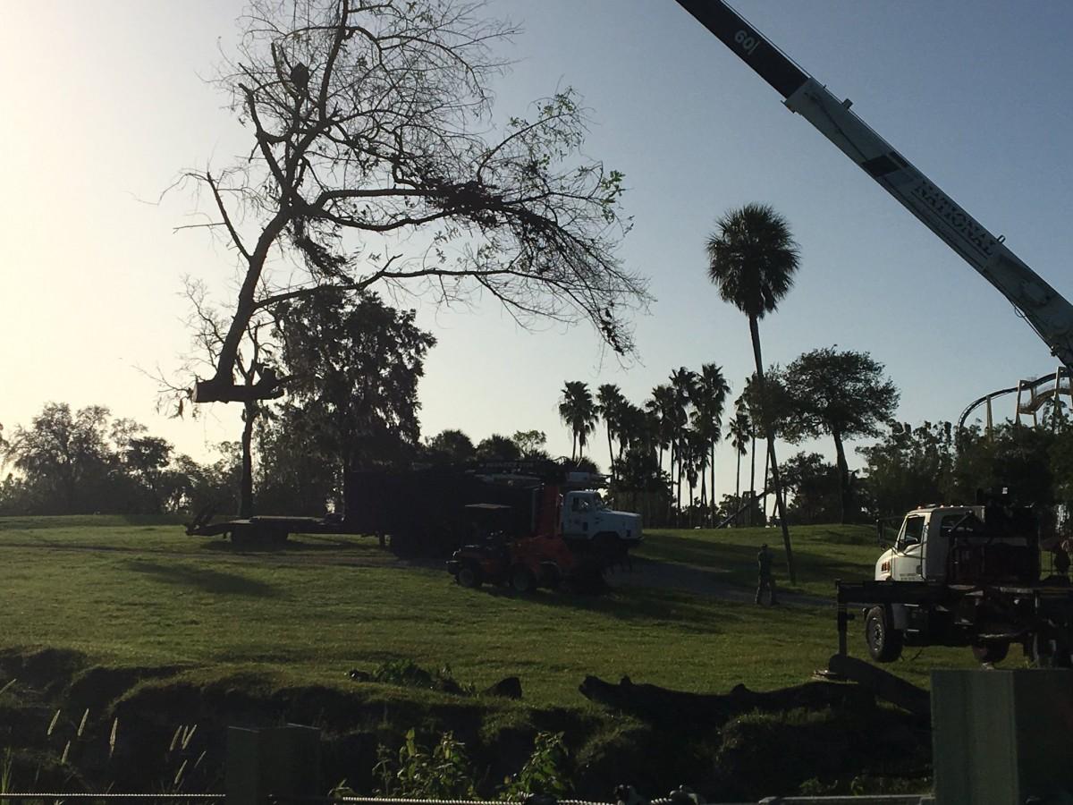Stump Grinding Odessa FL