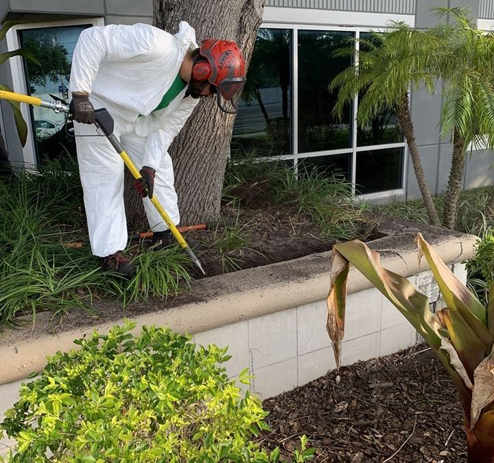 Tree Care Experts Helping Residents Of East Lake FL Keep Their Trees Healthy