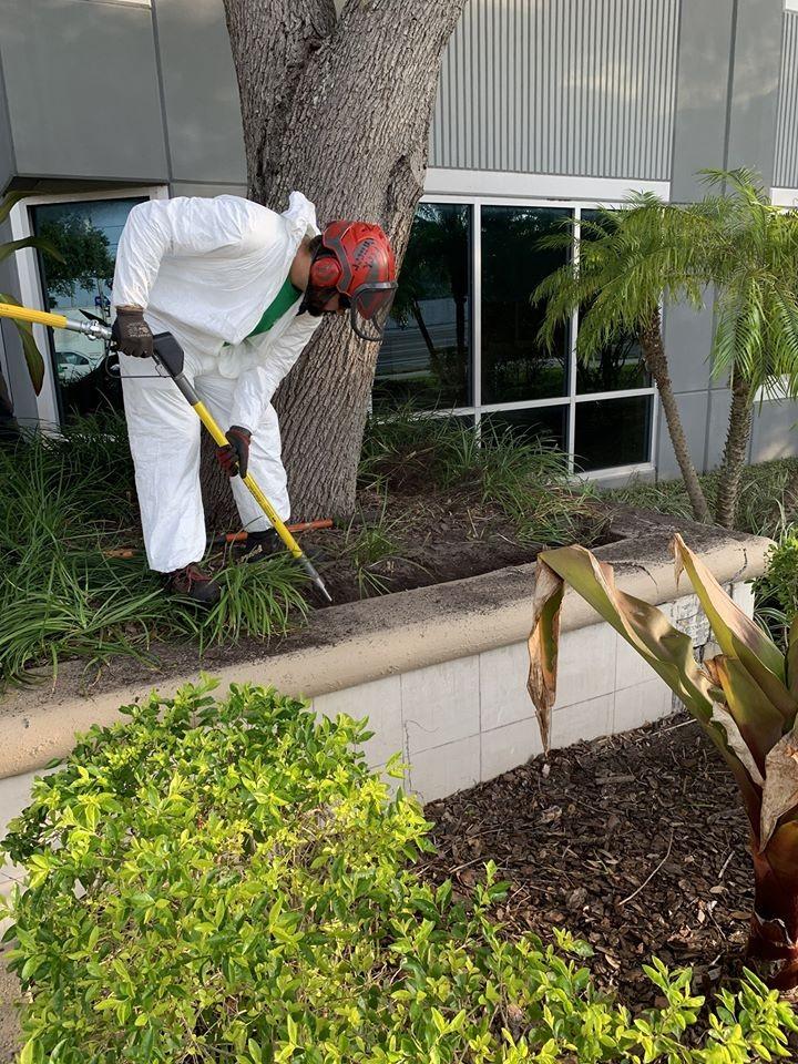 Tree care Odessa FL
