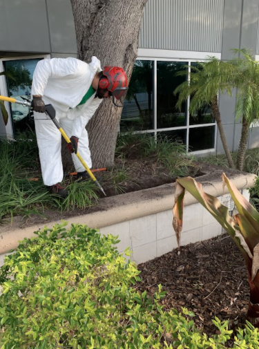 Arborist Aboard Offers Expert Tree Services in Tampa Bay, FL