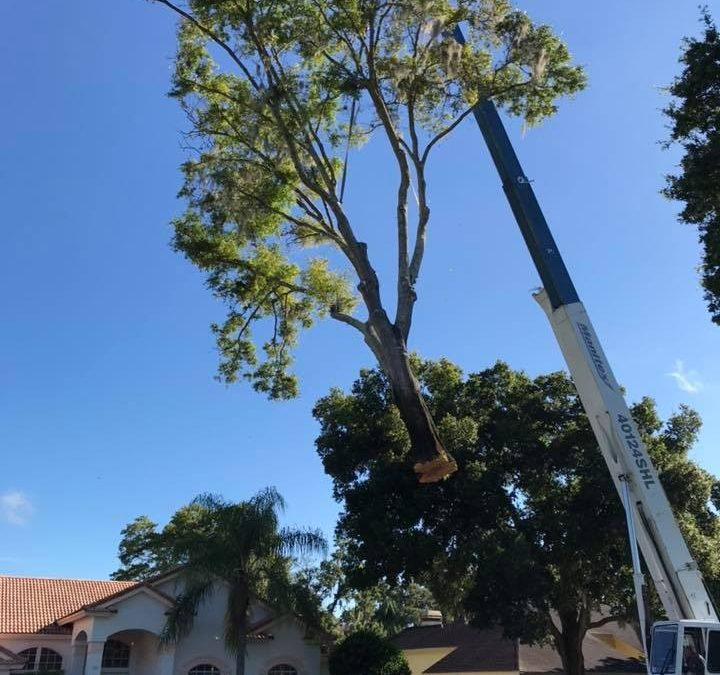 Westchase Florida's Arborist Offers Consultation Service To Homeowners