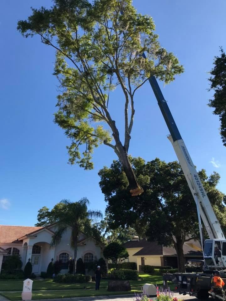 Tree Service Odessa FL