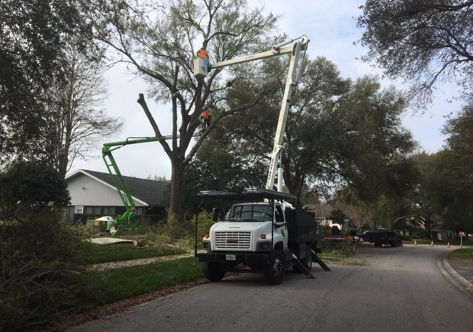 Arborist Aboard Available 24/7 For Tampa FL Emergency Tree Service Needs