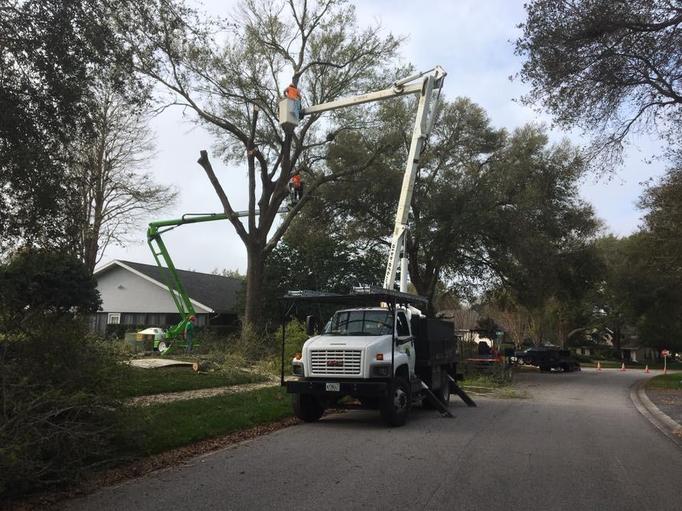 Tree Trimming Odessa FL