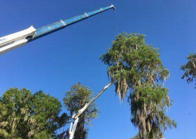 Tree Removal Odessa FL