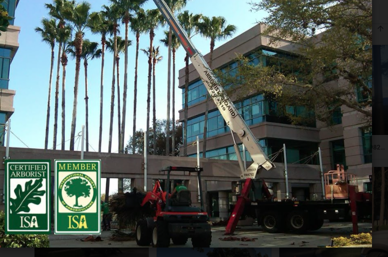 Tree Service Experts Offer Tips For Safe Tree Removals in Tampa Bay