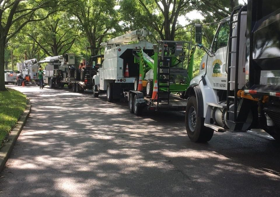 Odessa Arbor Company Offers Tree Care Tips