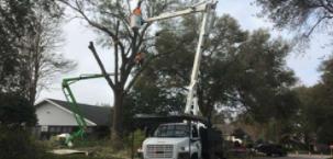 Local Tree Service Company in Odessa, FL Offers Premium Tree Service Tips
