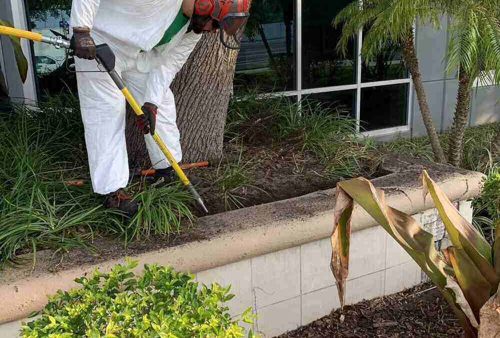 What Does an Arborist Do and How Can They Help You?