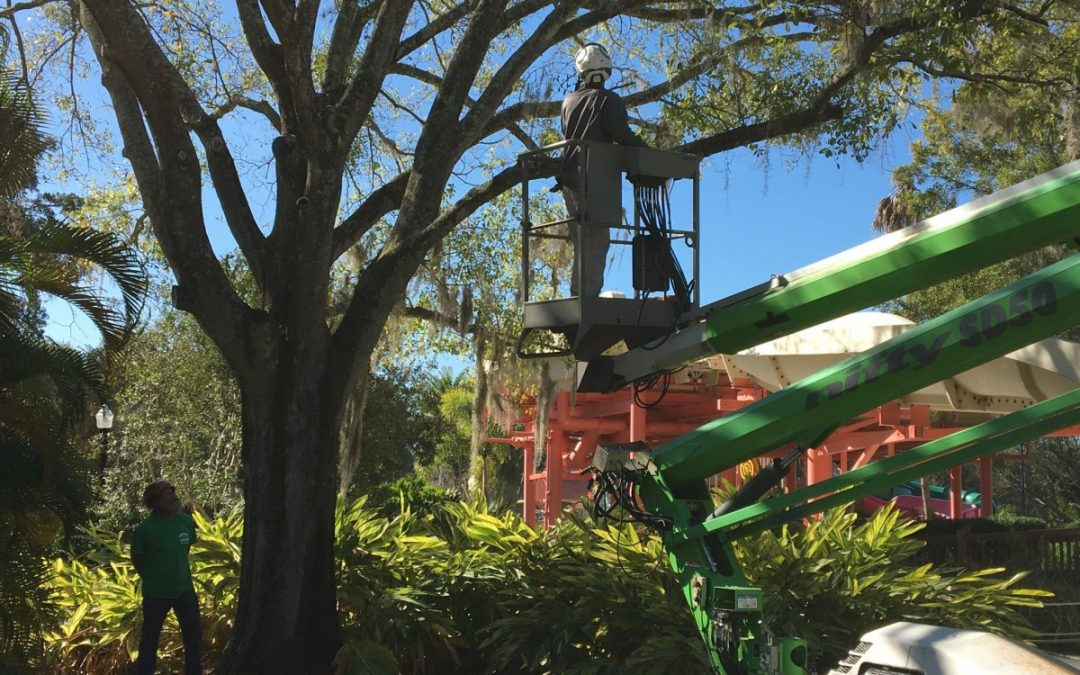 Arborist Aboard Offers Expert Tree Service In Tampa, FL