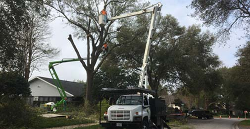tree-pruning-services